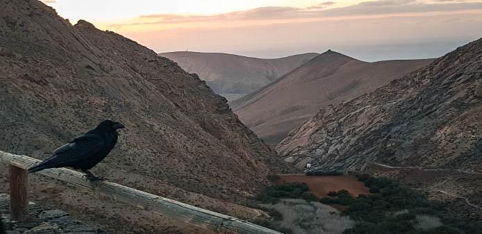 Los 10 planes imprescindibles en Fuerteventura